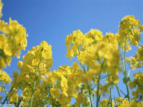 fiori di foto fiori di prato per sfondi settemuse it