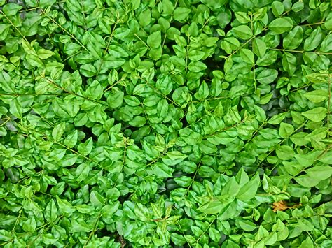 green plants for garden garden plant leaves pdf
