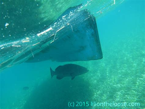 grouper belize giant don ledge missteps under travel yeah leaving alone guy