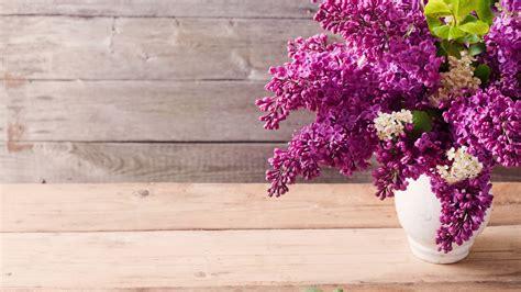 Purple Lilac Flowers Hd Desktop Wallpapers 4k Hd