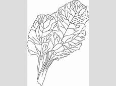 Chard coloring sheet Download Free Chard coloring sheet