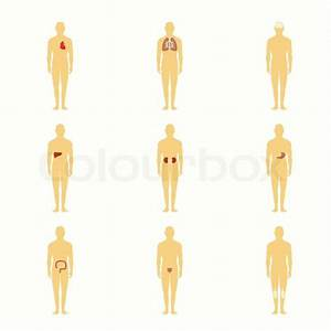 Human Male Silhouette Figures With Internal Organs Icons