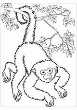 Coloring Monkeys Monkey Spider Printable Colouring Colour Adult Panama Getdrawings Getcolorings Justcolor Children sketch template