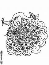 Peacock Coloring Pages Drawings טווס Printable Peacocks Google Cl Peafowl Start Adult Colours Coloring2print sketch template