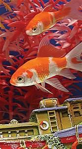 Ideal Aquarium Temperature Water Quality Maintenance