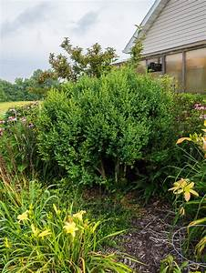 Bis Wann Hecke Schneiden : buchsbaum schneiden zeitpunkt hilfsmittel formen plantura ~ Frokenaadalensverden.com Haus und Dekorationen