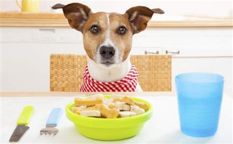 table food for dogs best weight loss dog foods dog food advisor