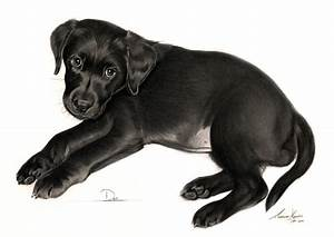 Commission - Black Labrador puppy 'Dot' by Captured-In ...