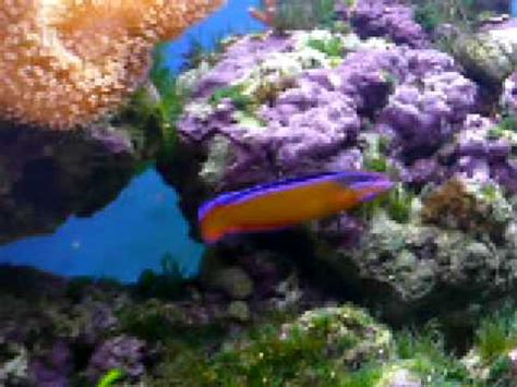 kit aquarium eau de mer complet aquarium eau de mer