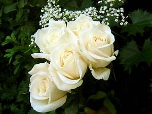 Life Is A Journey: White roses...a pure devotion