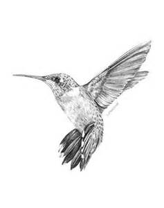 wedding cake drawing hummingbird drawing best images collections hd for