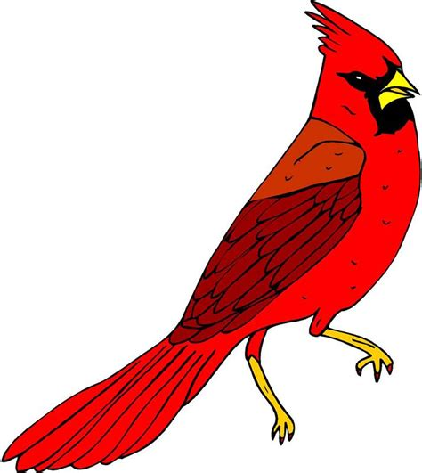 Cardinal Clipart Cardinal Bird Clipart Clipart Suggest