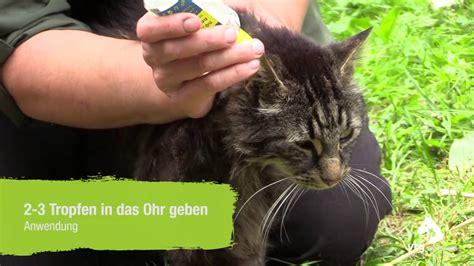 ohrmilben bei einer katze behandeln anwendung der nojuck