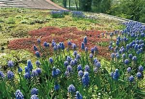 Extensive Dachbegrünung Pflanzen : dach bepflanzung dachbegr nung ~ Frokenaadalensverden.com Haus und Dekorationen