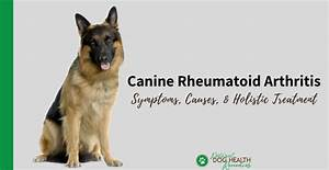 Canine Rheumatoid Arthritis Treatment And Natural Remedies