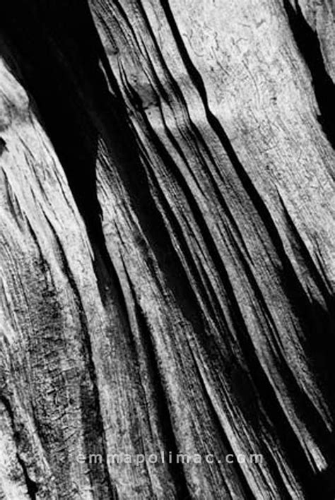 Abstract Black And White Photography Nature by Black And White Nature Photography Tree Bark Texture