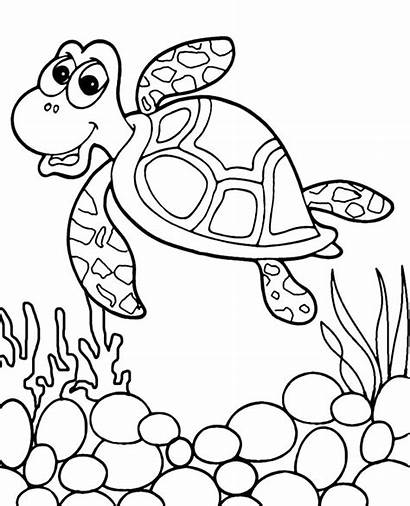 Coloring Turtle Pages Ocean Sea Animals Animal