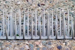 Faire Fuir Les Pigeons : quelques liens utiles ~ Melissatoandfro.com Idées de Décoration