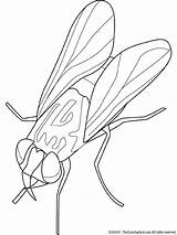 Housefly Coloring Colouring sketch template