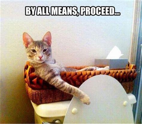 images  bathroom memes  pinterest