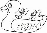 Duck Rubber Coloring Pages Ducky Drawing Outline Ernie Bert Printable Clipart Getdrawings Daisy Highest Clipartmag Cessna Getcolorings Drawings sketch template