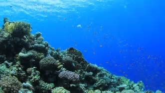 coral reef scene  numerous stock footage video