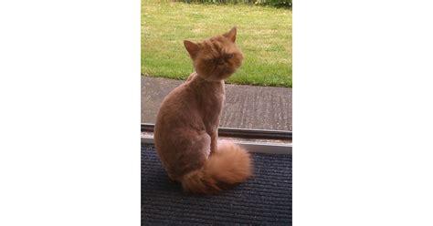 weather cat haircut popsugar took coming friend