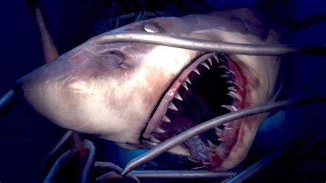 Je Me Suis Fait Attaquer Par Un Requin ! Youtube