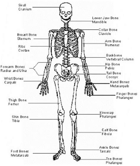 Resume Skeleton by Resume Of Science 4 Gurukita