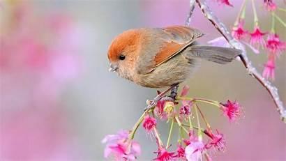Birds Trees Flowers Wallpapersafari