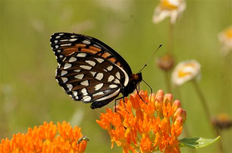 Great Plains Animals and Plants