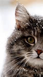 snow cats snow cat iphone 5 wallpaper 640x1136