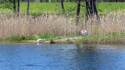 Zināmi pirmie peldvietu ūdens kvalitātes analīžu rezultāti ...