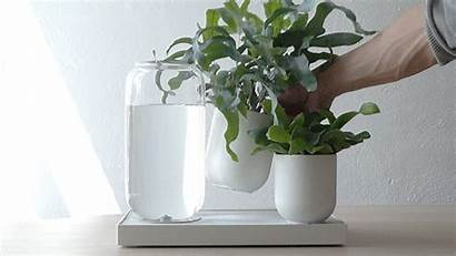 Plants Watering System Self Tableau Plant Irrigation
