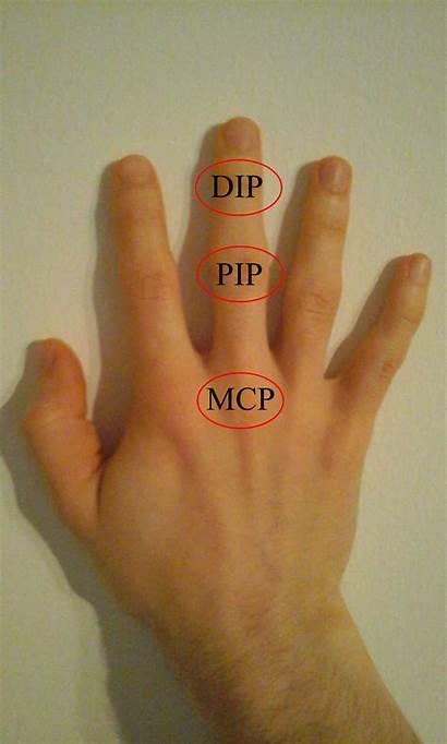 Pip Mcp Dip Joints