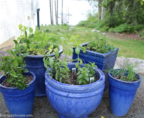 Kitchen In Your Garden by Easy Diy Kitchen Herb Garden In Deck Pots The Happy Housie
