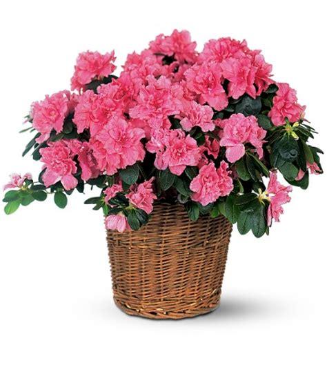 plante d hiver exterieur plantes fleuries d exterieur d hiver