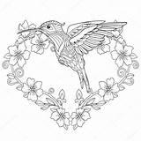 Hummingbird Coloring Zentangle Vector Pagina Kolibri Colibri Coloritura Hand Livre Freehand Flowers Hummingbirds Zwarte Illustratie Farbtonseite Coloriage Stilisierte Drawing Della sketch template