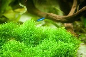 Moos Für Aquarium : lumen f r ein w rfelaquarium nanoquarium ~ Frokenaadalensverden.com Haus und Dekorationen