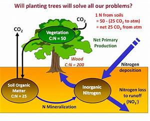 Pollution  Acid Rain  And Systems Thinking