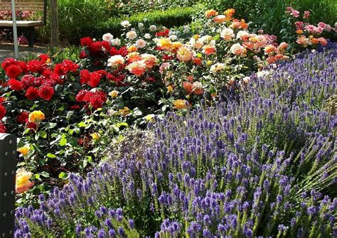 Rosenbeet Anlegen Beispiele by Idee Rosarium Rosenkabinett Anlegen Als Alternative