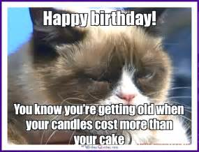birthday cat meme happy birthday memes with cats dogs and animals