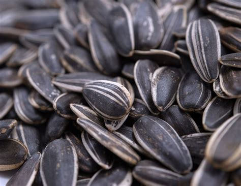 salt lovers dry roasted in shell whole sunflower seeds