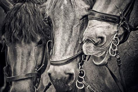 caballos cabezas de caballo foto gratis en pixabay