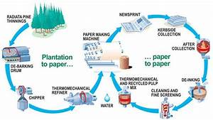 Pulp And Paper Manufacturing Processes In Papermaking Industry