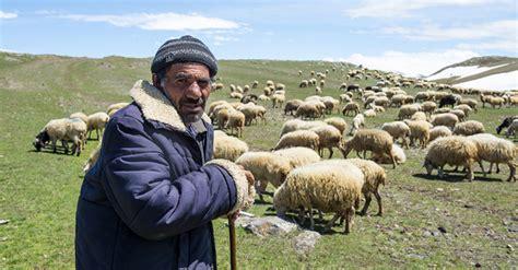 deb richardson moore  savior  born    shepherds