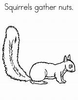Printable Squirrels Squirrel Coloring Pages Nuts Print Gather Colouring Sheets Template Bestcoloringpagesforkids Animals Nut Tree Getcoloringpages Preschool sketch template