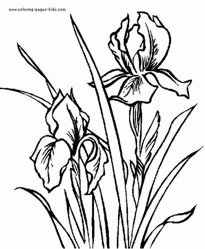 Diwarnai Untuk Gambar Sofina Coloring Flower Kaligrafi