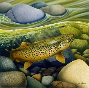Abstract Trout Paintings | www.imgkid.com - The Image Kid ...
