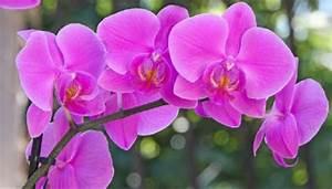 Comment Soigner Une Orchidée : les 5 r gles essentielles pour prendre soin d une orchid e ~ Farleysfitness.com Idées de Décoration